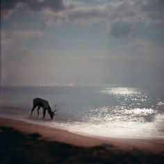 Unusual to see any animal drink sea water ~ very unusual