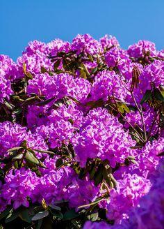 Grandview In Bloom   Wandering Educators