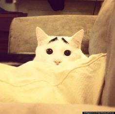 El gato con cejas !