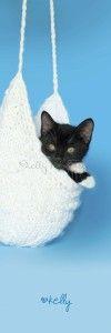 Rescue Kitten in Knitted Purse