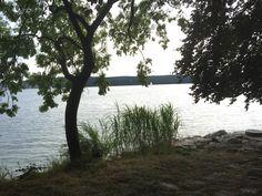 Mit dem Jaguar F Richtung Uhldingen am Bodensee. Jaguar, Trunks, Plants, Drift Wood, Tree Trunks, Plant, Planets, Cheetah