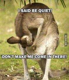 - Ach te kangury! | MaleZOO.eu