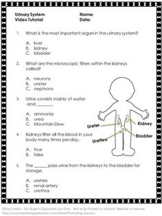 Urinary System: Here is a free urinary system worksheet or quiz and answer key to go along with a free YouTube video. The video link is in the free download. This quiz and video makes a great addition to your body systems science center activity.   https://www.teacherspayteachers.com/Product/Urinary-System-FREE-Video-and-Worksheet-Science-Human-Body-Biology-2057394