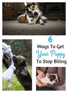 Effective and easy to implement 6 steps to stop puppy biting. Stop Puppy From Biting, Puppy Biting, Dog Training Books, Training Your Puppy, Training Tips, Training Schedule, Dog Nipping, Dog Separation Anxiety, Stop Dog Barking