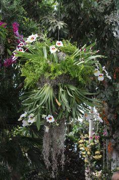 orchid-show-orchidchandelier-marie-viljoen-gardenista