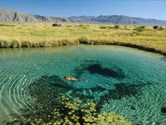 """Known as Cuatro Ciénegas, or """"four marshes,"""" this unique region of sparkling waters was set aside by the Mexican government as a biological reserve."""