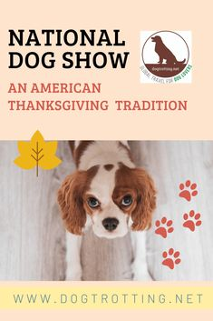 Thankful for The National Dog Show ... but mostly for dogs