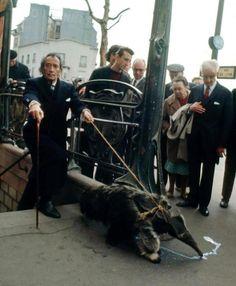 1969 – SALVADOR DALÍ:   Levando seu Tamanduá para um passeio em Paris.