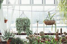 Hanging plants in the Barbican Conservatory, photographed by India Hobson for The Garden Edit