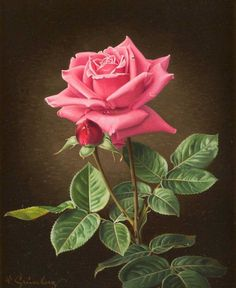 Wolfgang Grünberg (1909-2001) - A pink rose