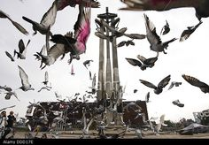 Gdansk, Poland 31st, August 2013 800 carrier-pigeons fly from Gdansk to Warsaw to honour Gdansk's August Agreements anniversary. © Michal Fludra/Alamy Live News