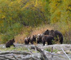 Marvellous bears by Igor Shpilenok