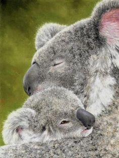Mother and Baby Koala, Colin Bradley Art, Colin Bradley, SAA Professional Members' Galleries