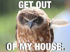 owl memes - Google Search