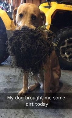16+ Viral Animal Photos That Are so Funny You Have to See Them