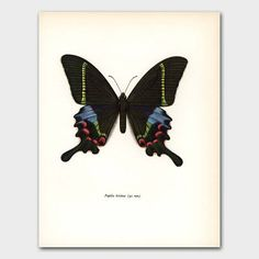 Butterfly Print Krisna Peacock Swallowtail 1960s Monarch