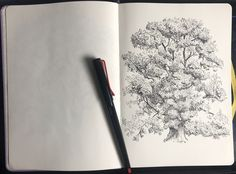 Sycamore maple in pen and ink Tree Sketches, Acer, Ink, India Ink