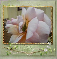 Natureza - A Rosa e o amigo Gafanhoto