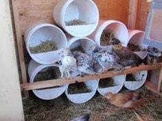 My Coop Journey - BackYard Chickens Community Walk In Chicken Coop, Cute Chicken Coops, Backyard Chicken Coop Plans, Chicken Barn, Raising Backyard Chickens, Chicken Coop Designs, Chicken Chick, Chicken Runs, Diy Chicken Feeder