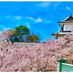 【nyachis_6yx】さんのInstagramをピンしています。 《. ❤️💛💚💜💙 . Flower🌸 . 早く春こんかな〜と口ぐせ😩💕💕 その割りには寒い日でもアイス食べるw 雪景色も綺麗やけど温度が厳しい。。 花粉症の人やと春は地獄やろうな思う😅 春の時期は金沢城公園は桜まみれで すごい綺麗ねんてね🌸🌸❤️❤️! 金箔のソフトクリームもオススメ🎶 今年も見に行けるかな🤔🤔🤔🤔🤔💚💚 石川おれるうちにおって色々と思い出作っとこ🎶🌟🌟 . #金沢城公園#桜#少し気が早い #雪よりも春がいい#青空と桜合う #いつもいいねしてくれる方ありがとうです #自分らしく#楽しんで#写真撮ろ #今日は節分#豆まき#鬼は外福は内 #ig_japan#instagood#wu_japan #ic_japan#igres#Japan#photo #jp_gallery#loves_nippon#enjoy #like4like#view#smile#good》