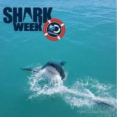 "Producers of Shark Week 2019 is wrapping up it's filming. Soon the world will get into the now familiar ""shark frenzie"" The most important takeaway from ""Sharkathon"" television is to remember that these shows are primarily entertainment viewing. Enjoy them, but don't fall for them hook, line and sinker. All Sharks, Apex Predator, Great White Shark, Seaside Towns, Shark Week, Killer Whales, Whale Watching, Marine Life, Mammals"