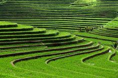Rice Terraces, Bali, Indonesia Buddha Wear is the #Sustainable #Fashion Brand proudly based in the beautiful Island of #Bali, Indonesia www.buddhawear.com.au