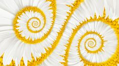 калейдоскоп, белый цветок, ромашка, портал фото