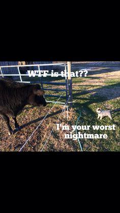 Australian Cattle Dog. No Fear.......LOL!!!