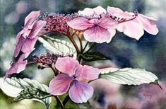 WaterColor Flower Paintings By Marney Ward . She has been painting watercolor florals for about 20 YEARS! Artist Painting, Watercolour Painting, Watercolor Flowers, Watercolors, Art Floral, Canadian Artists, Belle Photo, Lovers Art, Collages