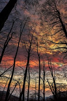 """ponderation: """"Sunset in the forest by Pier Luigi Saddi """""""