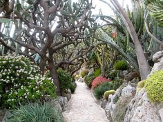 The Exotic Gardens in Monaco