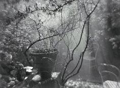 Josef Sudek, A Summer Shower in the Magic Garden , 1954-59.