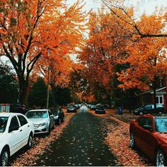 Orange fall trees and cool breeze in Montreal. 🍁 Picture by @master.vincent. #mtlblog #mtlblognews #montreal #montréal #mtl #quebec #québec #qc #canada #mtlmoments #downtownmontreal #oldmontreal #oldportmtl #fall #fall2016 #autumn #autumn2016 #vancouver #britishcolumbia #toronto #ottawa #ontario #calgary #edmonton #halifax #novascotia