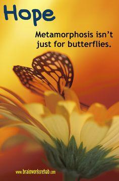 Metamorphosis isn't just for butterflies.