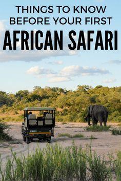 Things to know before your first African safari  #travel #travelling #destinations #travelblogger #travelstories #travelinspiration #besttravel #tourism #travelwriter #travelblog #traveldeeper #traveltheworld #Safari    http://adventuresoflilnicki.com/