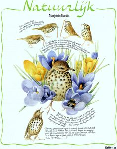 Marjolein Bastin, my collection,nature page