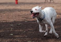 Firefighter who made disturbing comments about how to kill pit bulls is demoted