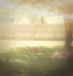 Jakey under his tree♥