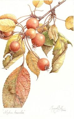 Margaret Best | American Society of Botanical Artists