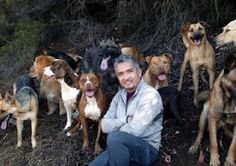 Camp Wander: Essential Oils for Pets: Dog Whisperer Approved