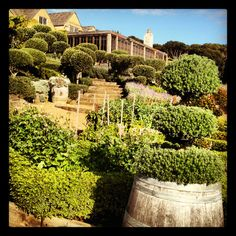 Mudbrick vineyard - our Venue! Vineyard, Mansions, Landscape, House Styles, Wedding, Outdoor, Ideas, Decor, Valentines Day Weddings