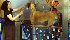 5 off self serve dog wash coupon from diy pet wash for the coin operated self serve dog wash equipment solutioingenieria Image collections