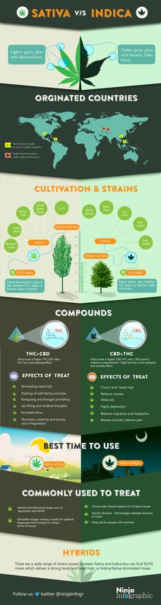 Sativa vs Indica    #infographic #Marijuana #Drugs