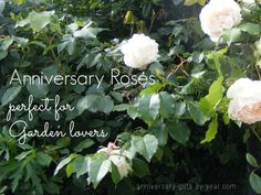 Anniversary roses and lots of ideas for gardening gifts perfect for each anniversary symbol