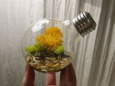 Tiny Terra, small plants in light bulbs.this is a really clever idea Light Bulb Terrarium, Recycled Light Bulbs, Design Visual, Creation Art, Old Lights, Incandescent Light Bulb, Light Led, Family Crafts, Small Plants