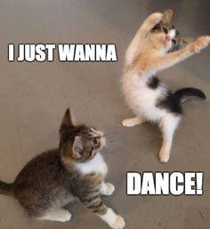 Tiffany hwang i just wanna dance funny cats funny animal memes cat memes Animal Humour, Funny Animal Photos, Funny Animal Jokes, Funny Dog Memes, Cute Memes, Cute Funny Animals, Funny Animal Pictures, Funny Animal Videos, Funny Cute