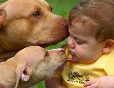 Pitbulls and babies