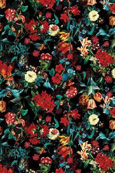 Exotic Garden II Canvas Wall Art by Burcu Korkmazyurek | iCanvas