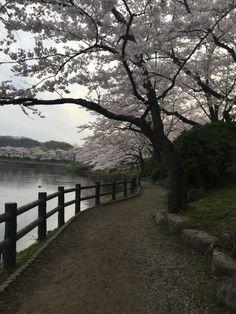 373:「早起きして朝の散歩をした時に撮りました。」@高松公園