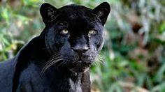 animales salvajes fotos hd - Buscar con Google